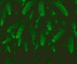 green, verde, and wallpapers image