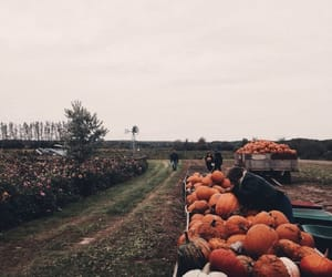 autumn, fall, and pumpkin patch image