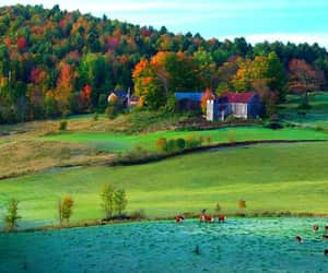 """""""Cattle Graze Below the Farm on a Hill, in Reading, Vermont"""" 🍁kc 
