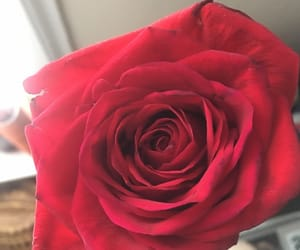 beautiful, red, and love image