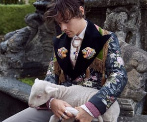 harry styles for gucci's tailoring campaign by glen luchford
