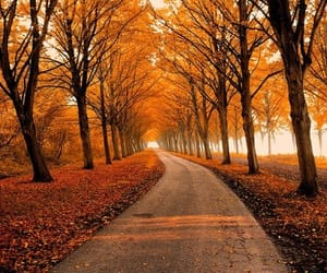 autumn, fall, and yellow leaves image