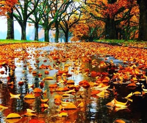 autumn colors, leaves, and rainy day image