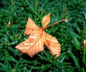 fall, autumn, and leave image