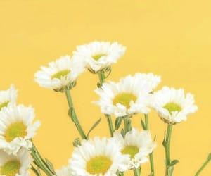 aesthetic, yellow, and alternative image