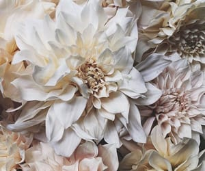 dahlia flower, pretty floral flowers, and chic luxe rich wealthy image