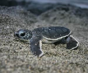 Animales, Tortuga, and animals image