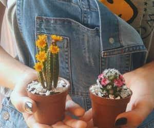 cactus, chicas, and girls image