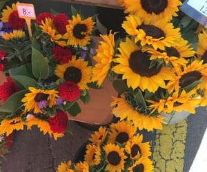 fall, market, and sunflowers image