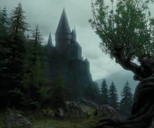film, forest, and hogwarts image