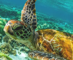 animals and turtle image
