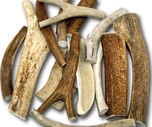 dogs, dog chews, and antlers dog chews image