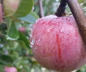 apple, breakfast, and raindrops image
