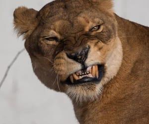 animals, teeth, and wild image