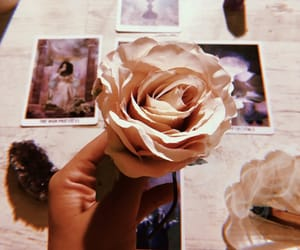 aesthetic, positivity, and rose image