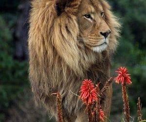 animal, strong, and beautiful image