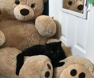 black cat, cat, and boo image