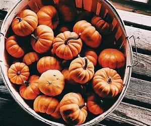 autumn, mini, and pumpkins image