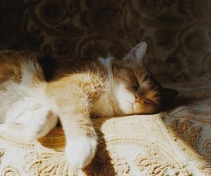 cat, old, and inspiration image
