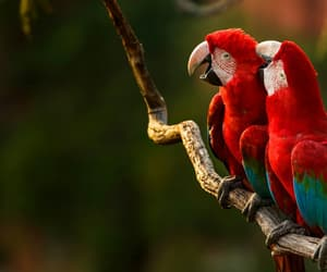 birds, brazil, and photography image