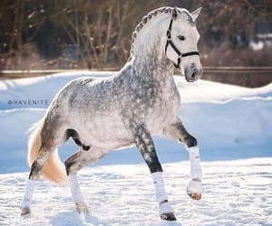 horse, lo, and love image
