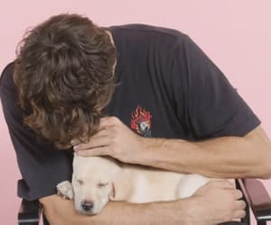 adorable, dogs, and peter kavinsky image