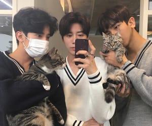 cats, ulzzang, and korean boys image