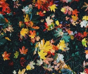 autumn, leaves, and autumn colors image