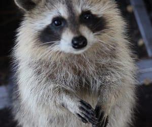 Animales, naturaleza, and mapache image