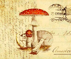 antique, mushrooms, and postcard image