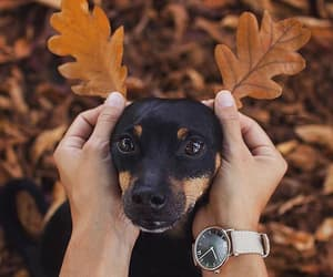 animals, autumn, and leaves image