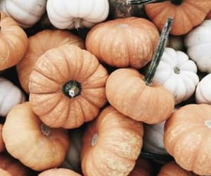 autumn, orange, and pumpkin image