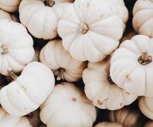 background, autumn wallpaper, and pumpkin image
