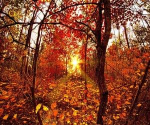 autumn colors, sunshine, and trees image