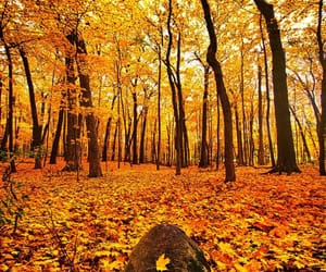autumn colors, leaves, and nature photography image