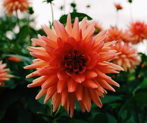 aesthetic, colours, and flower image