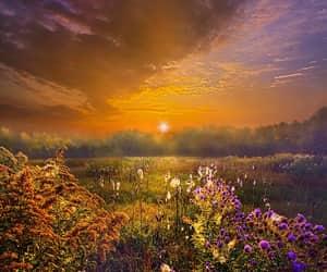 flowers and sunrise image