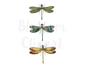 dragonfly, digital download, and vintage clipart image