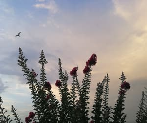 clouds, Croatia, and flower image