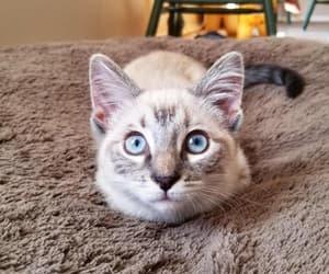 amazing, animal, and cat image