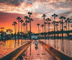 amazing, colors, and palm trees image