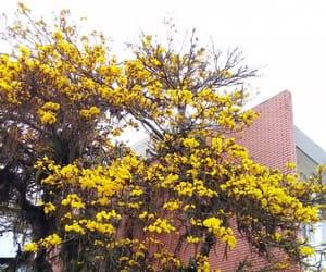 flower, university, and rain image