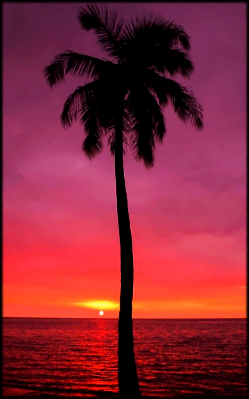 Hawaii Sunset With A Lonely Palm Tree Mobile Phone Wallpaper