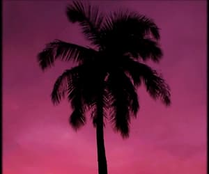 sunset, purple-palm tree, and mobile-wallpaper image