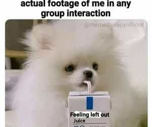 dog, sad, and facts image