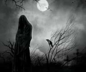 bird, gothic, and night image