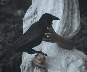 crow and raven image