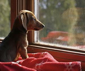 looking, puppy, and window image