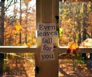 fall, leaves, and love image