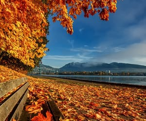 autumn colors, bench, and canada image
